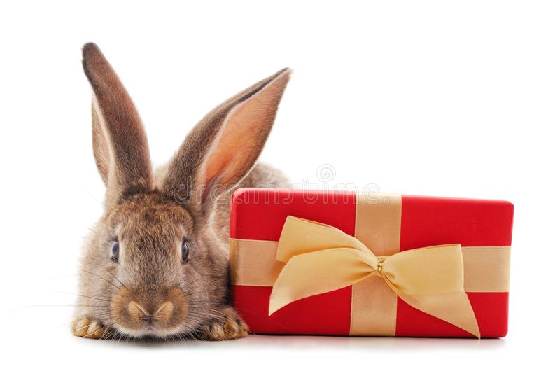 One brown rabbit with gift stock images