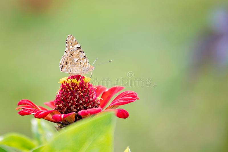 One butterfly on flowers stock photos