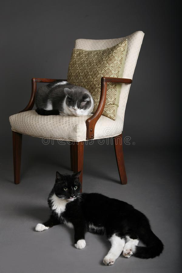 One cat two cat stock images