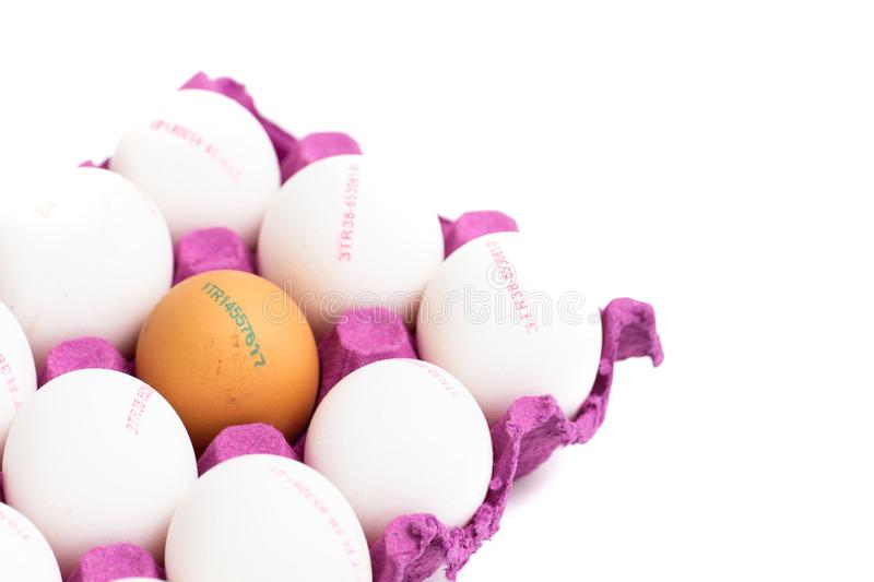 One chicken brown egg in white eggs and the numbers on them.  stock photography