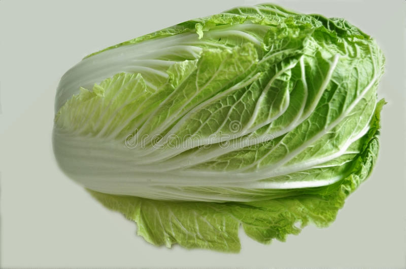 Download One Chinese cabbage stock image. Image of diet, food - 17646625