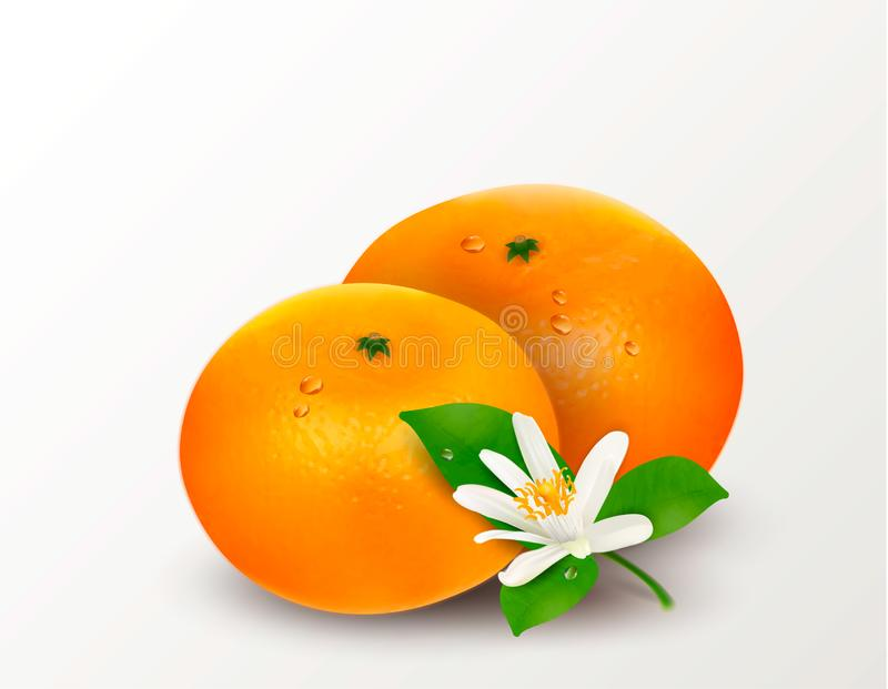 One citrus fruit mandarin or tangerine isolated on a white background. Realistic Vector Illustration vector illustration