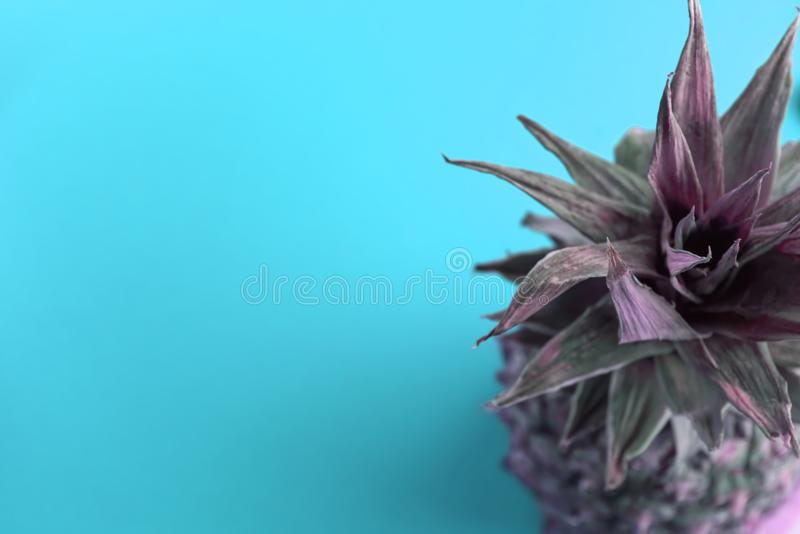 One colored pineapple on blue background stock photography