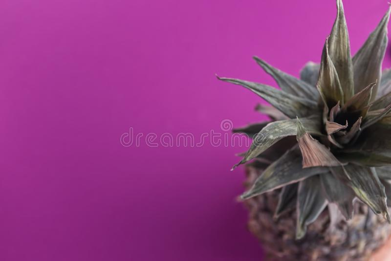Download One Colored Pineapple On Pink Background Stock Photo