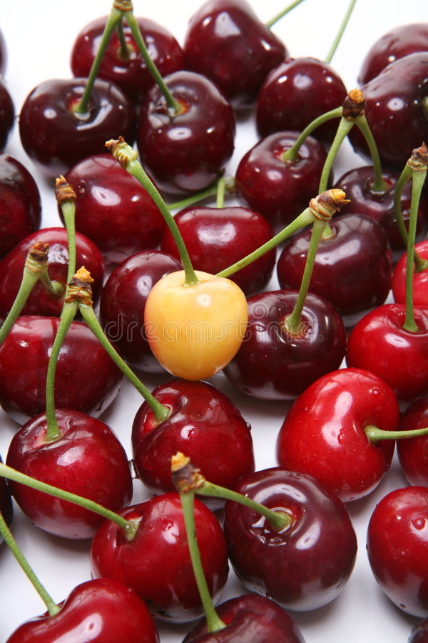 One in a Crowd. A premature cherry standing out from the crowd royalty free stock photo