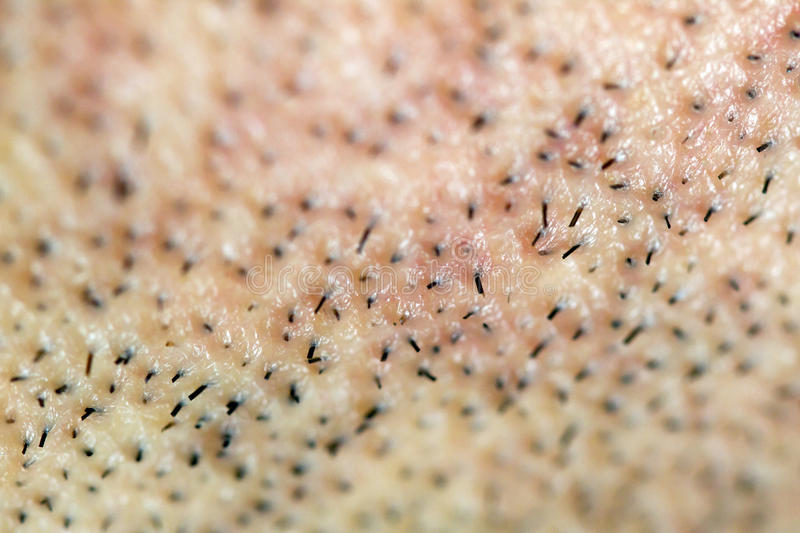Download One Day Old Beard Hair Macro Stock Images - Image: 21044984