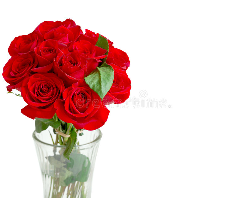 One Dozen Red Roses. A beautiful bouquet of bright red, perfect, long stemmed roses in a glass vase, on white with copy space royalty free stock images