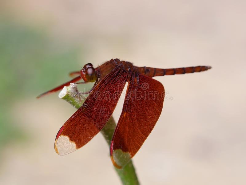 The dragonfly on background. stock images