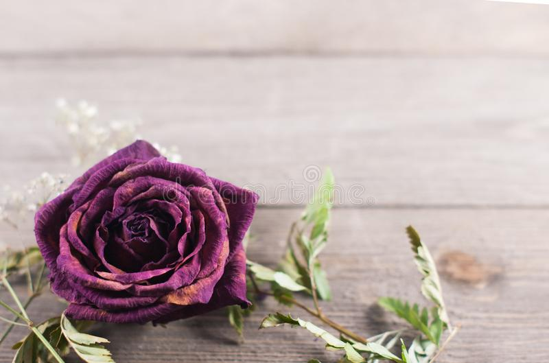 One dried red rose on a wood background royalty free stock photography
