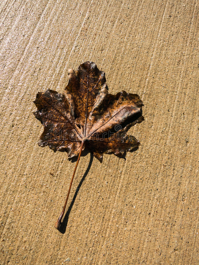 Download One dry leaf stock image. Image of nature, outdoors, autumnal - 39510415