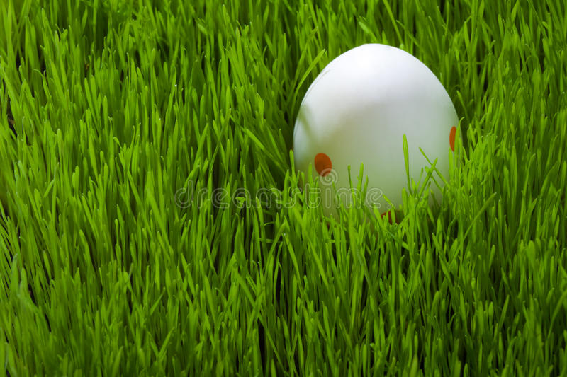 One easter Egg on grass stock images
