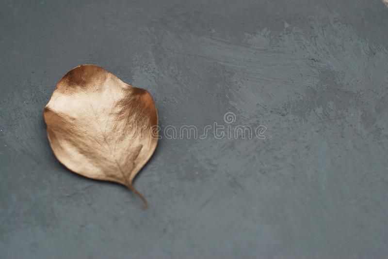 One Eucalyptus Leave painted with Golden Color Paint. Fashion Glam Background. Flat Lie. Gray Board with Copy Space. stock image
