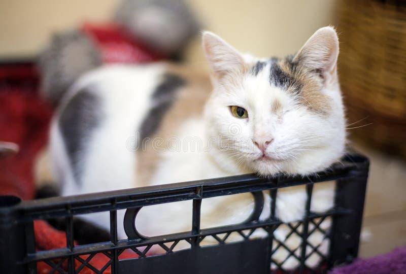 One-eyed cat portrait stock images