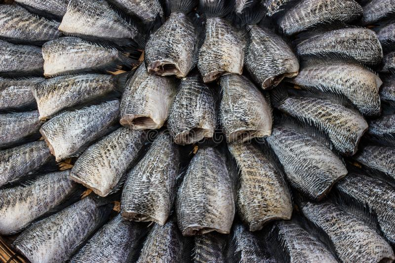 Trichogaster pectoralis, Dried fish. royalty free stock photos