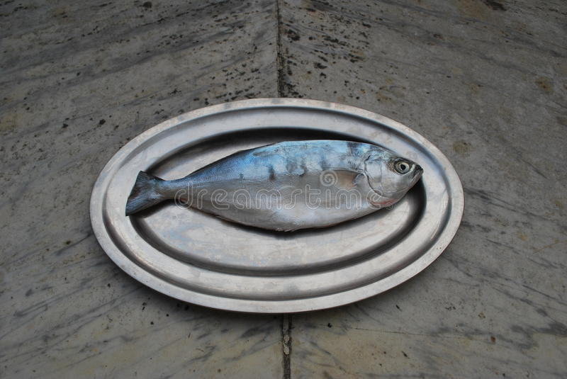 One fish on a platter stock image