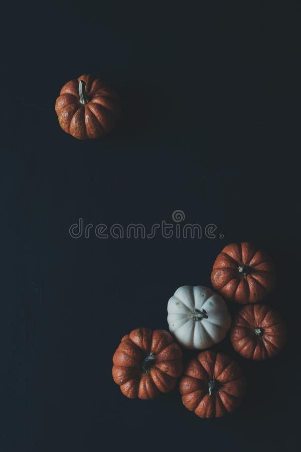 One and Five Brown Pumpkins stock photography