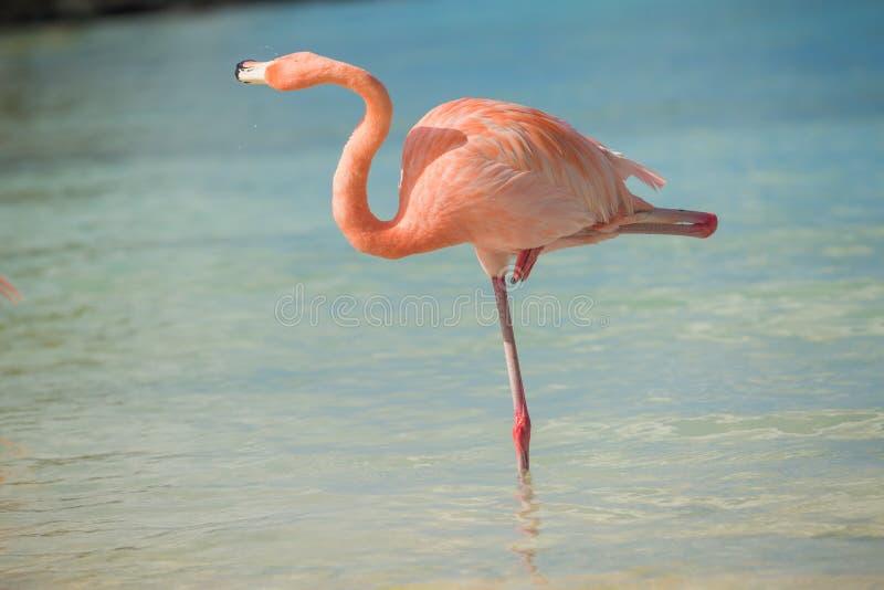 One flamingo on the beach royalty free stock photo