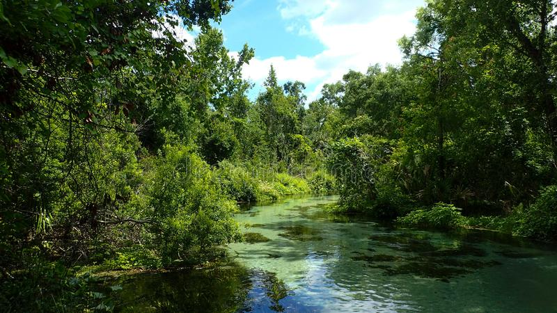 One of Florida`s many springs. Where locals go to cool off on a hot sunny spring day royalty free stock image