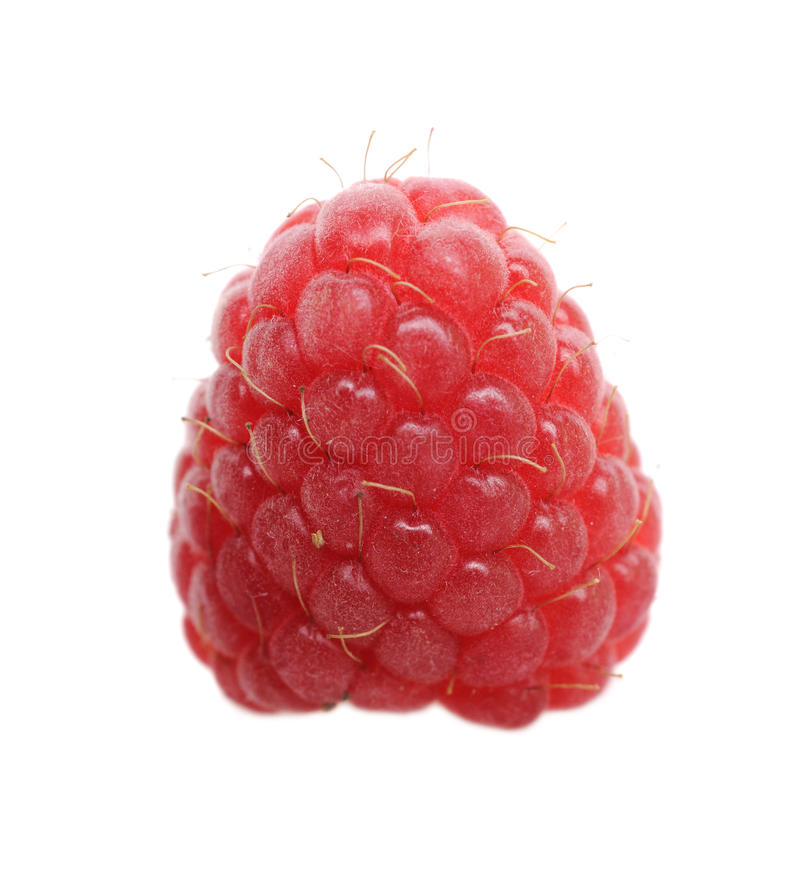 Download One fresh raspberry stock photo. Image of sweet, healthy - 14996190