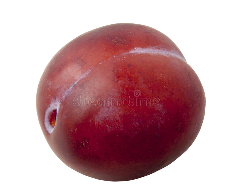 One fresh red plums on a white background. royalty free stock photo