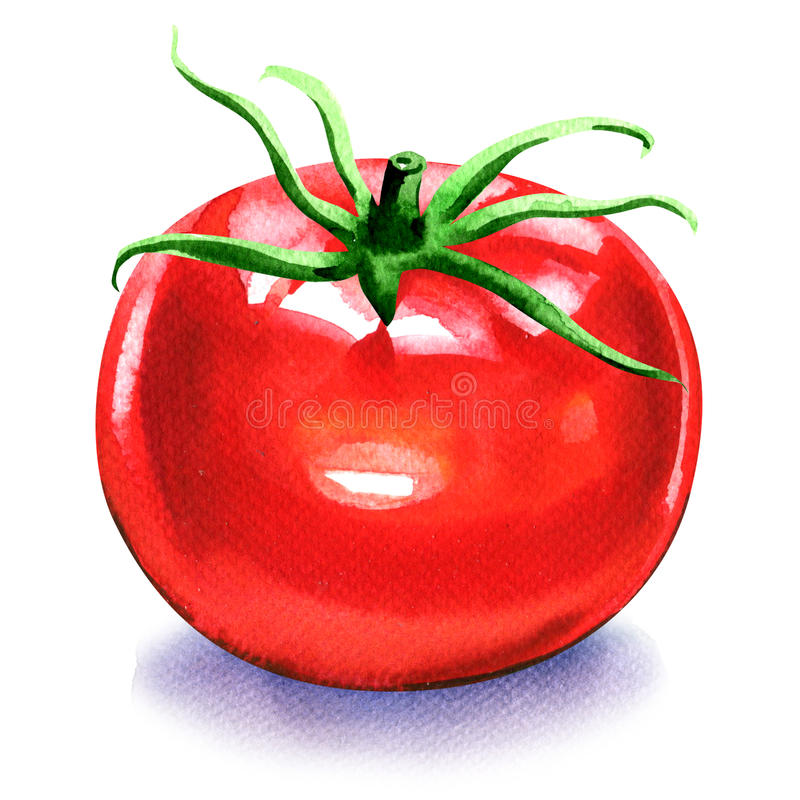 Free One Fresh Red Tomato Isolated On White Royalty Free Stock Photos - 65990898