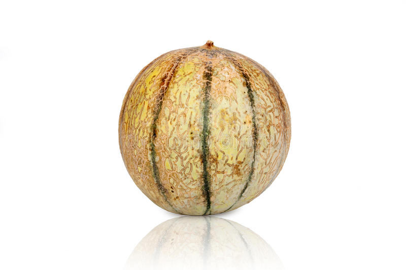 One Galia Melon Cantaloupe. Isolated and mirrored on white Background stock images