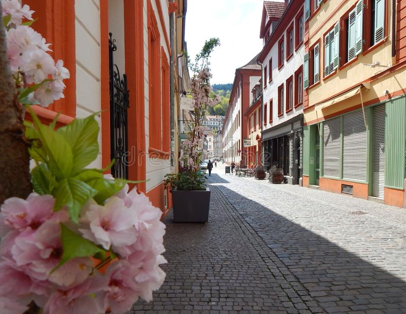 Street in `Heidelberg` with flowers and cobblestones royalty free stock photos
