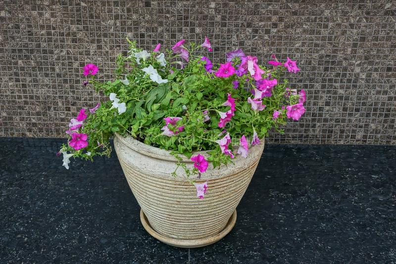 One gray flowerpot with decorative flowers on a black sidewalk near a brown wall. In the street royalty free stock photo