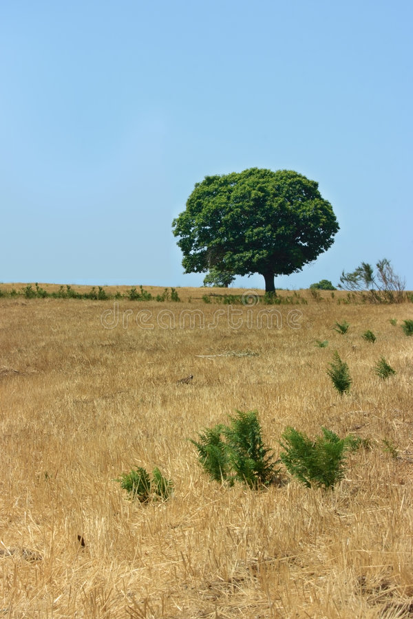 Download One Green Tree Royalty Free Stock Image - Image: 7189366