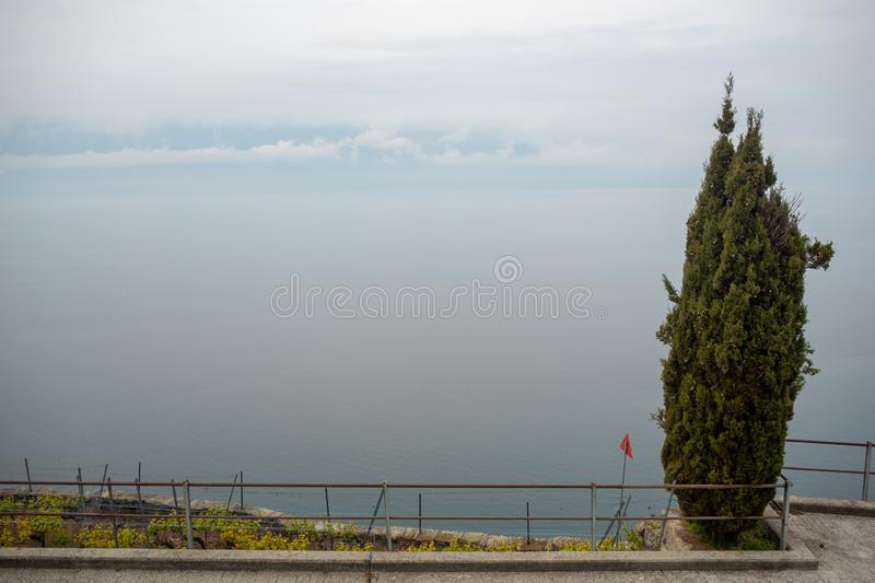 One green tree on beautiful panorama view of Geneva lake and cloudy sky background stock photography