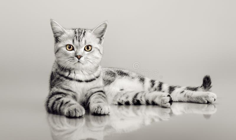 One grey stripy beautiful little kitten stock images