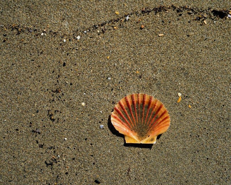 New Zealand Shells: Marine, Land, and Freshwater