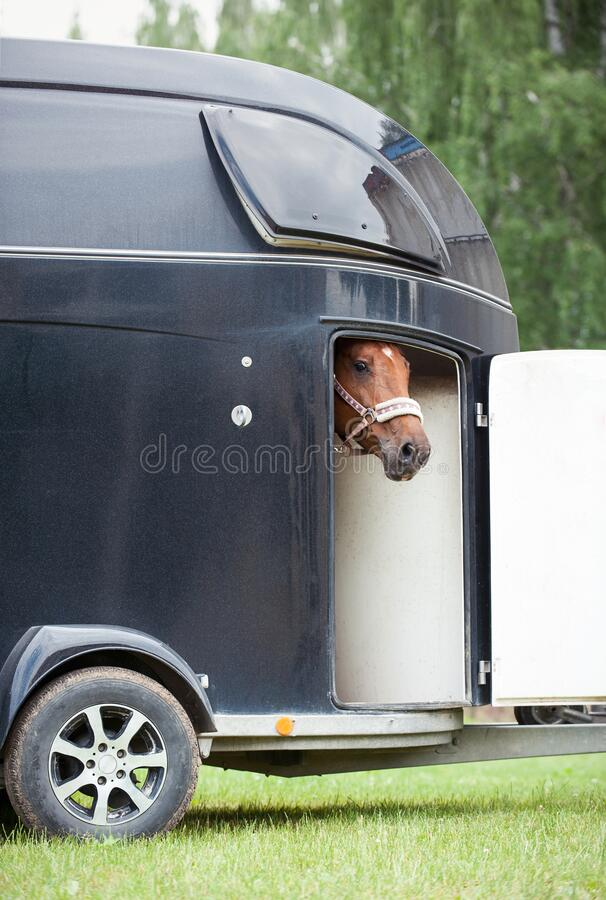 Free One Horse Standing In Trailer Waiting For Competition Royalty Free Stock Images - 195834889