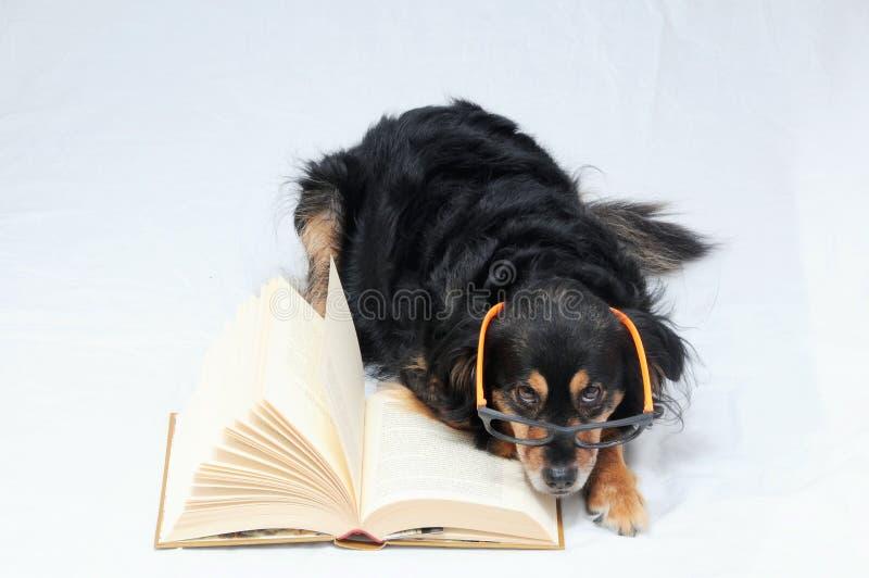Reading Dog stock images