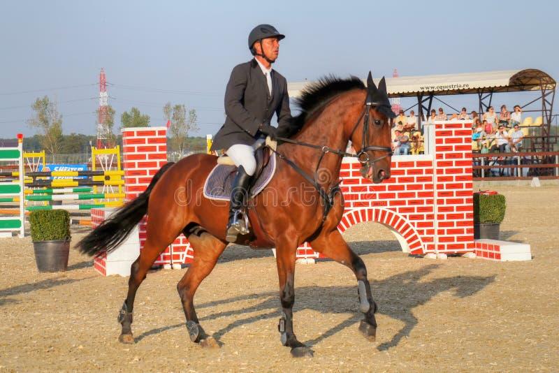 Jockey horseback riding on purebred red horse royalty free stock image