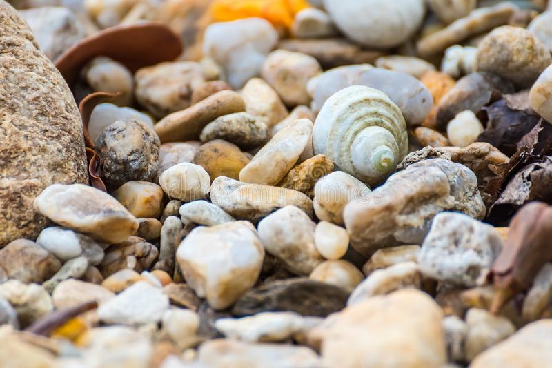 One large seashell lies on top of many small round seashells.Thailand stock photos