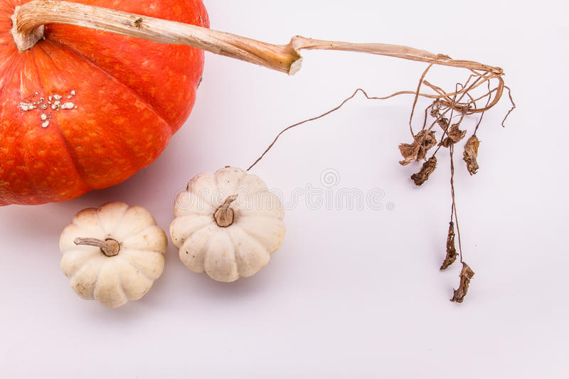 One large and two small white pumpkins on a white background royalty free stock photography