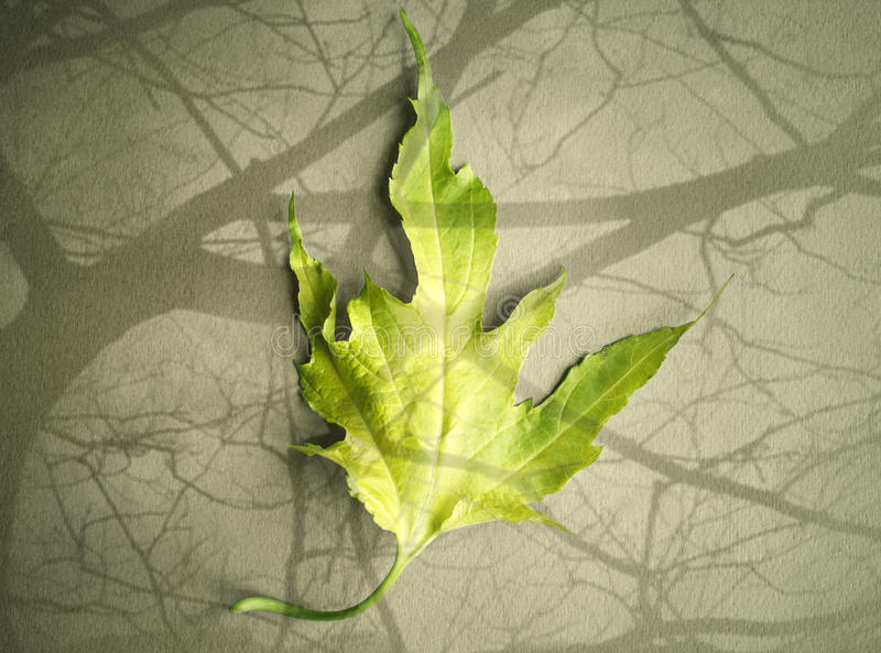 One leaf royalty free stock images
