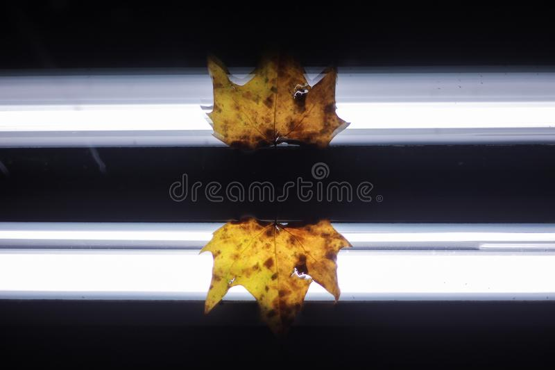Mirror reflected autumn leaf stock photography