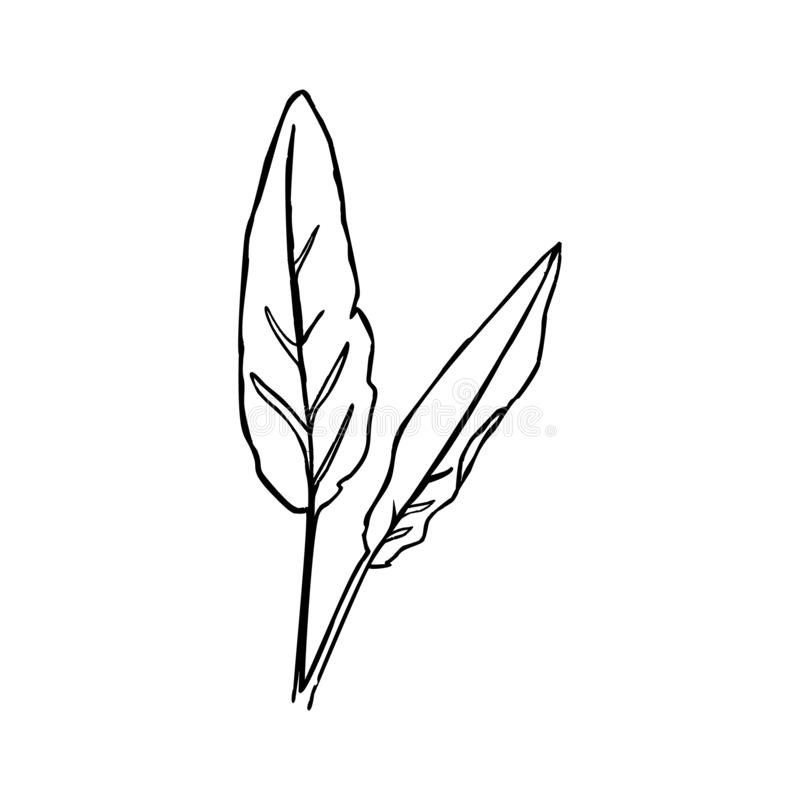 One Line The Banana Leaf. Continuous line tropical plant In a Modern Minimalist Style. Vector Illustration vector illustration