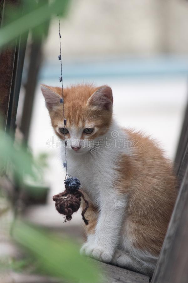 One little cat. Playing with a ball of wool royalty free stock image