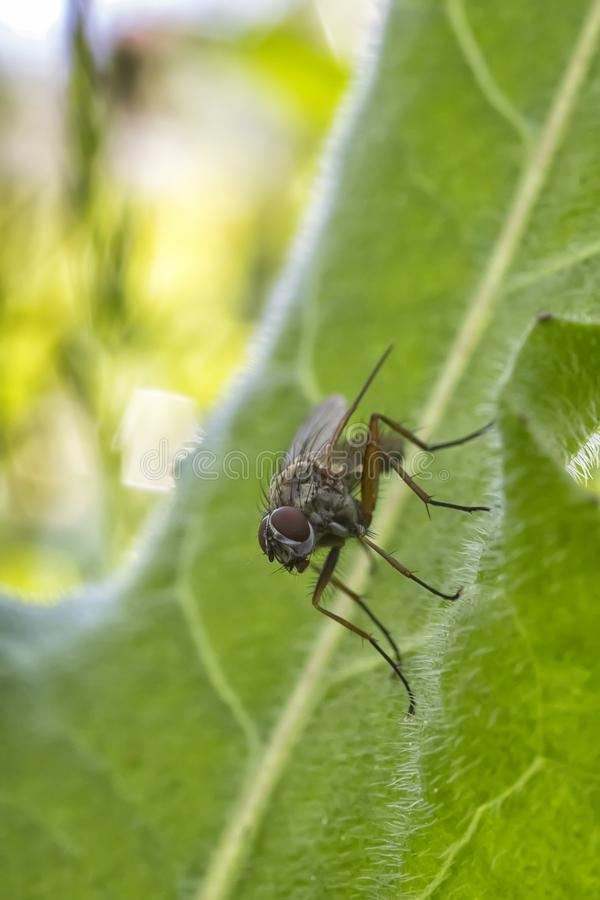 One little fly sits on a green leaf of a plant in nature. royalty free stock images