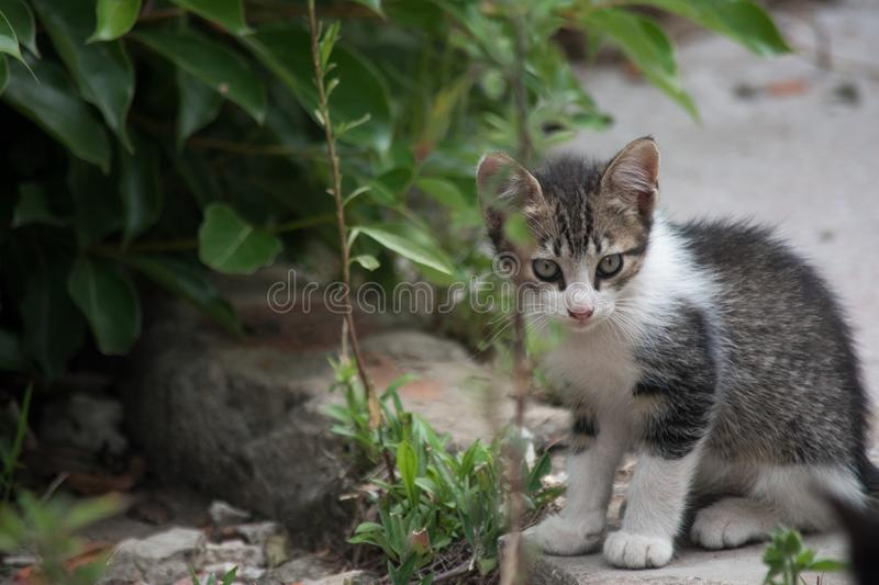 One little grey cat. In a garden royalty free stock photos