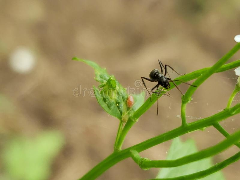 One is the loneliest number. Ant, exploration, bug, micro, jaws royalty free stock photo