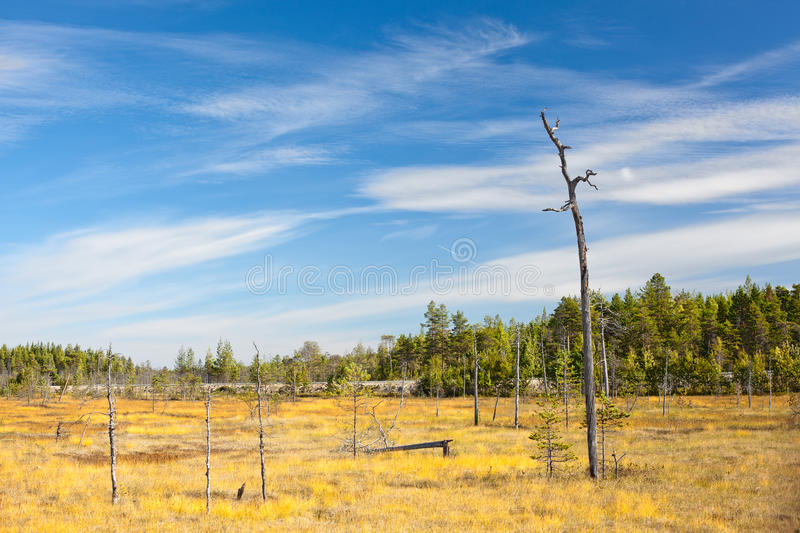 Download One Lonely Dry Stem Of Tree Stock Photo - Image: 23651800