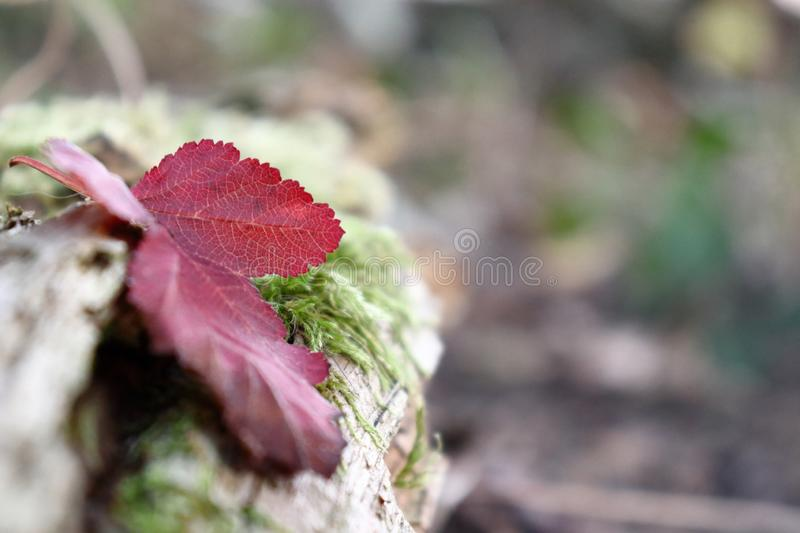 One lonely leaf in own garden in bavaria royalty free stock photography