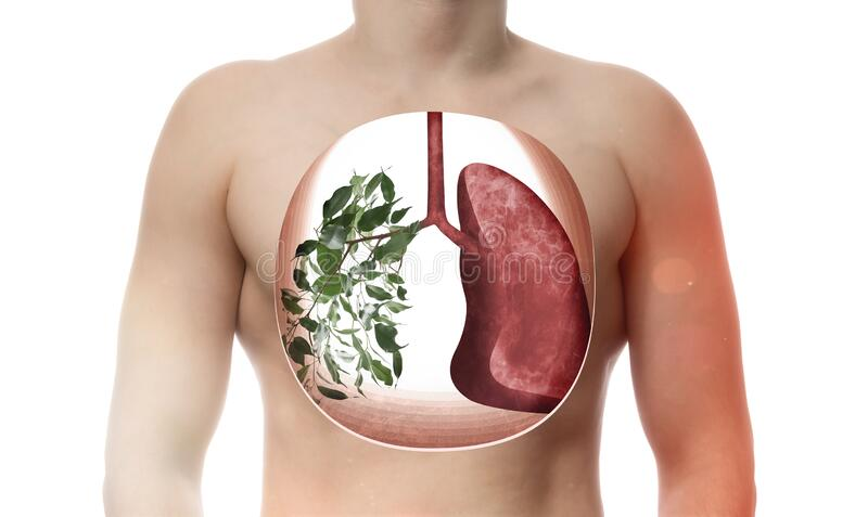 One lung consists of green leaves as metaphor healthy respiratory system. Creative image of human lungs in body. One lung consists of green leaves as metaphor stock photos