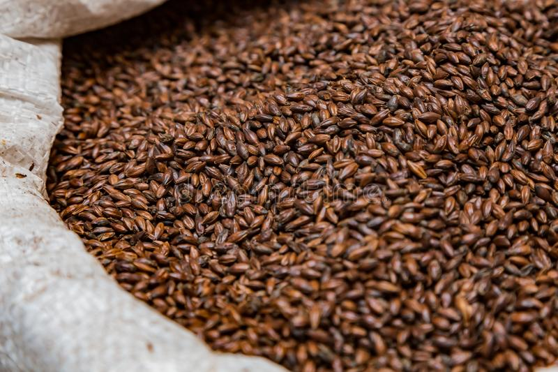 Close-up Dried Dark Black Barley Malt in a sack for brewing beer royalty free stock images