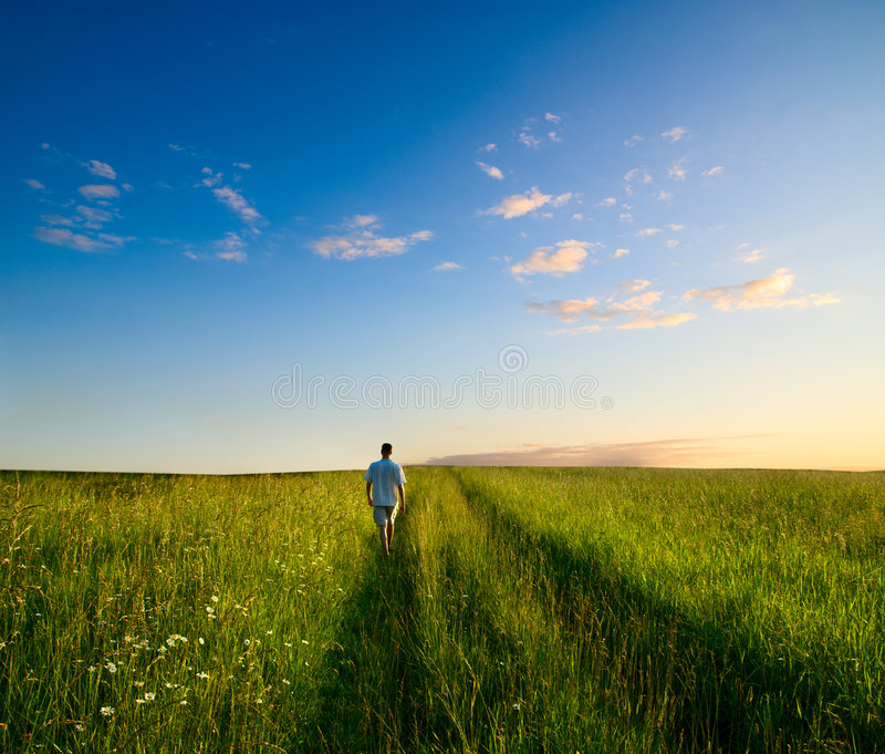 One man and field of summer grass royalty free stock photo