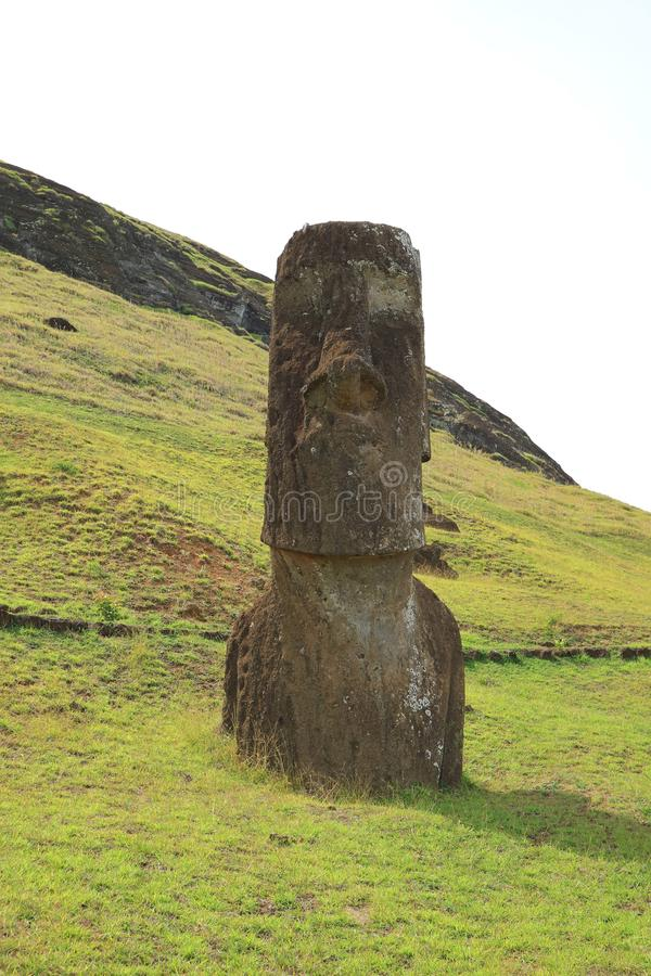 One of many abandoned huge Moai statues on the slope of Rano Raraku volcano, Easter Island of Chile Archaeological site royalty free stock images
